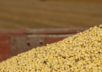 Ohio Soybean Field Leader Soybean Seed Quality