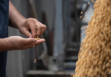 Ohio Field Leader Soybean Grain Marketing Tips
